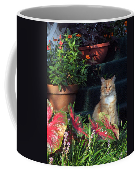 Cat Coffee Mug featuring the photograph Cat Postcard by Robert Meanor