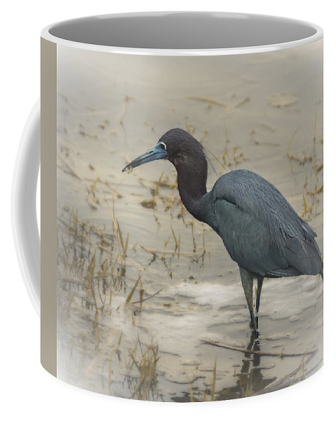 America Coffee Mug featuring the photograph Catch Of The Day by Eduard Moldoveanu