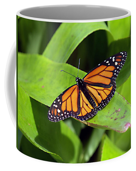 Bug Coffee Mug featuring the photograph Catching Some Rays by Bob Johnson
