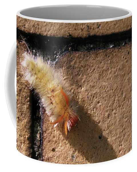 Caterpillar Coffee Mug featuring the photograph Caterpillar With Shadow by Cecilia Swatton