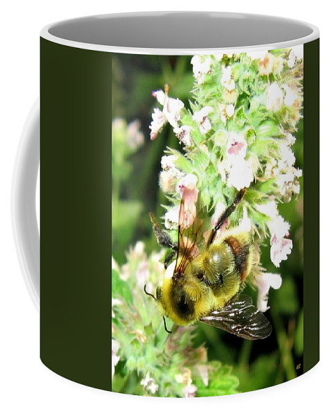 Bee Coffee Mug featuring the photograph Catnip And The Bee by Will Borden