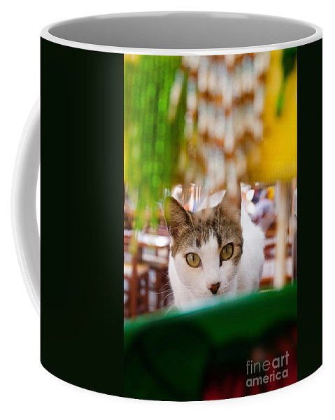 Cat Coffee Mug featuring the photograph Cat's Eye On Me by Sven Brogren