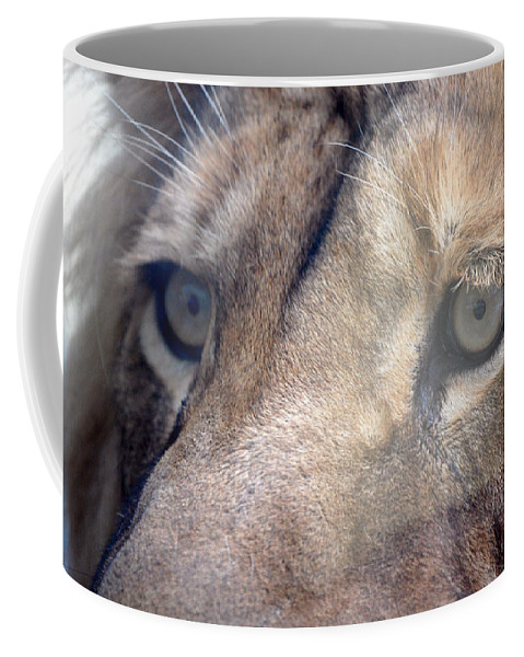 Lion Coffee Mug featuring the photograph Cats Eyes by Lisa Kane