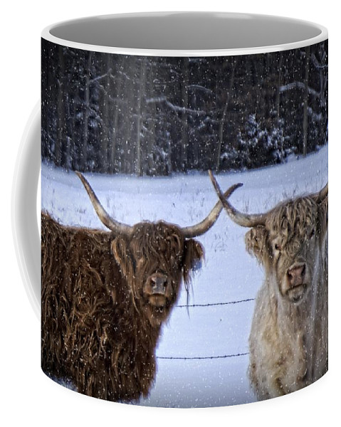 Cattle Coffee Mug featuring the photograph Cattle Cousins by LuAnn Griffin