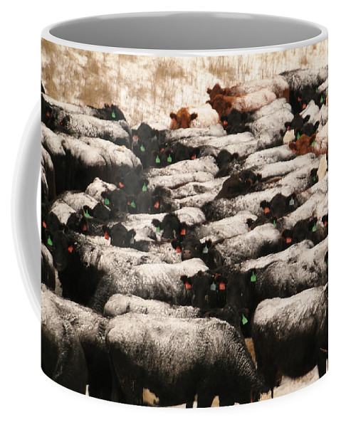 Cows Coffee Mug featuring the photograph Cattle With Snow On Their Backs by Jeff Swan