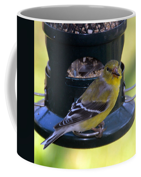 Seeds Coffee Mug featuring the photograph Caught At The Feeder by Kate Scott
