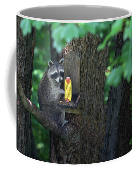 Raccoon Coffee Mug featuring the photograph Caught In The Act by Karol Livote