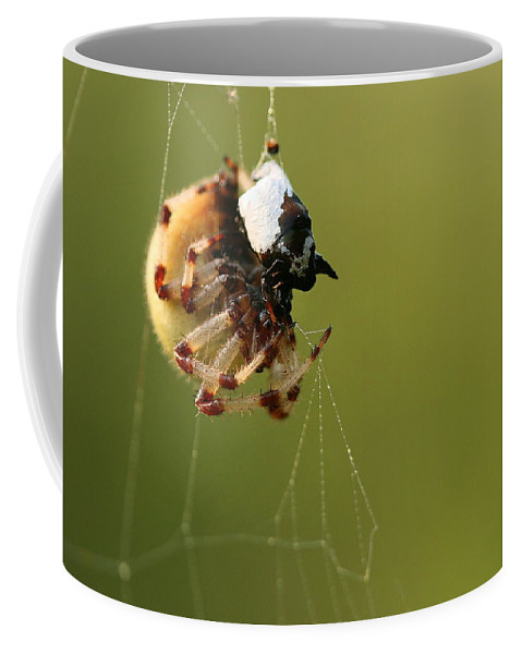 Web Coffee Mug featuring the photograph Caught In The Web by Angela Rath