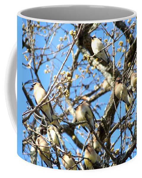 Cedar Waxwing Coffee Mug featuring the photograph Cedar Waxwing Family by Jai Johnson