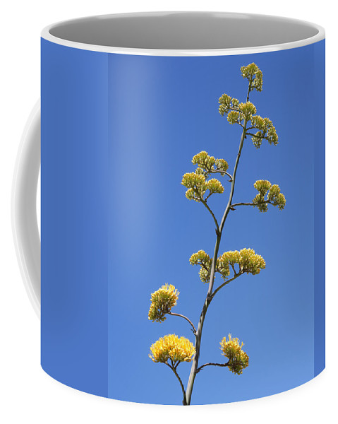 Century Plant Coffee Mug featuring the photograph Century Plant Flowers by Kelley King