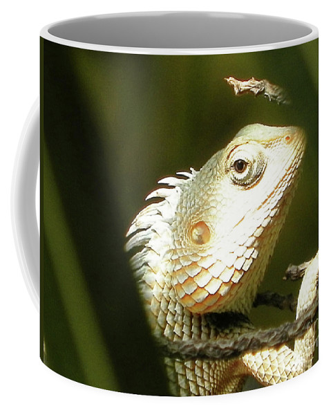 Chameleon Coffee Mug featuring the photograph Chameleon Up-close 1 by Gallery Hermana