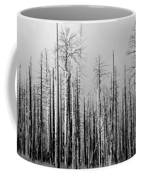 Charred Coffee Mug featuring the photograph Charred Trees by James BO Insogna