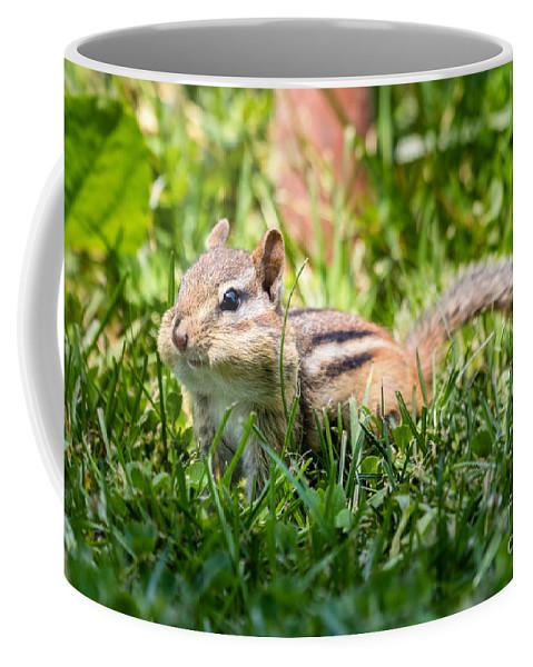 Chimpmunk Coffee Mug featuring the photograph Cheeky Chipmunk by Dawna Moore Photography