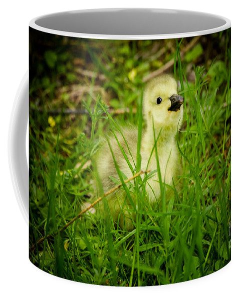 Cheeky Coffee Mug featuring the photograph Cheeky Duckling by F Helm