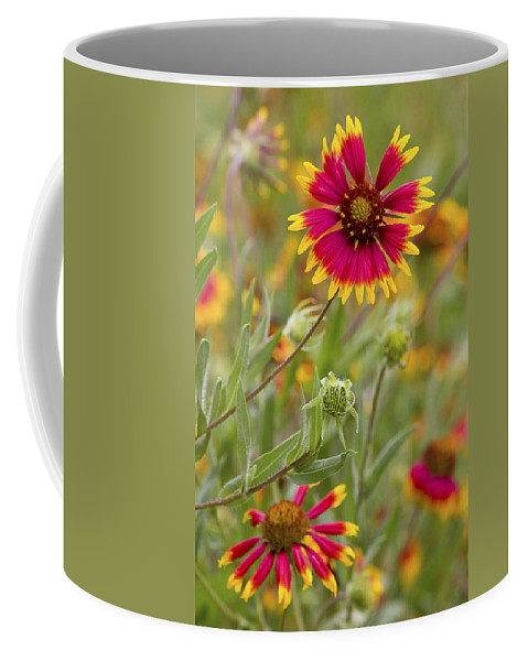 Flower Coffee Mug featuring the photograph Cheerful Greeting by Becky Titus