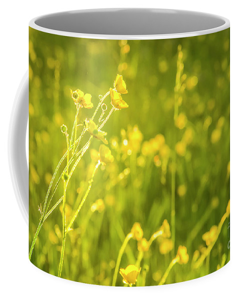 Buttercup Coffee Mug featuring the photograph Cheery Buttercups by Amy Sorvillo