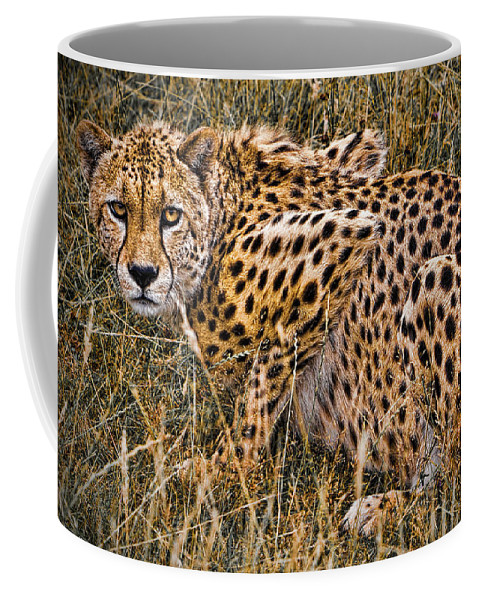Big Coffee Mug featuring the photograph Cheetah In The Grass by Chris Lord
