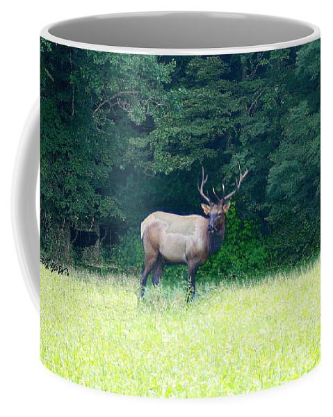 Cherokee Elk Coffee Mug featuring the photograph Cherokee Elk by Seth Weaver