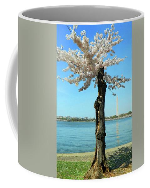 Cherry Blossom Portrait Coffee Mug featuring the photograph Cherry Blossom Portrait by Emmy Marie Vickers