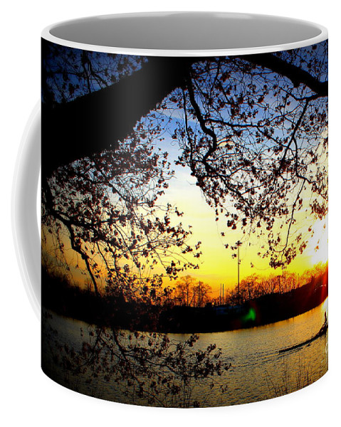 Coffee Mug featuring the photograph Cherry Blossoms On The Charles by Hanni Stoklosa