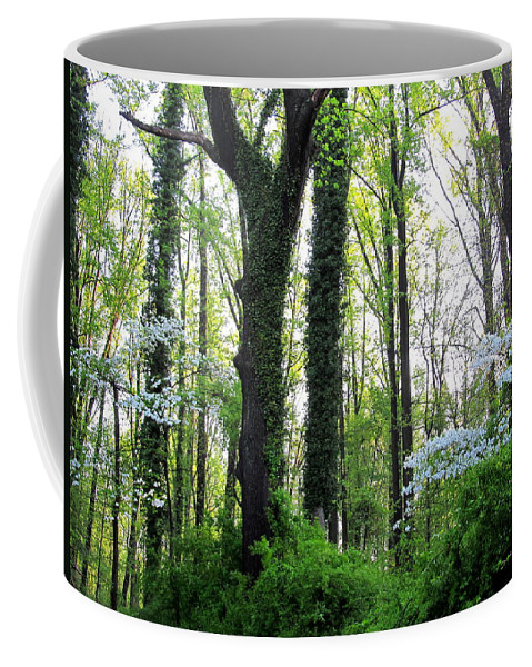 Oldgrowth Forest Landscapes Endangered Habitat Mature Forest Ecosystems Wetland Forest Rare Habitats Maryland Mature Forest Chesapeake Forest Nature Prints Rare Nature Biodiversity Conservation Maryland Flora Endangered Forest Biodiversity Coffee Mug featuring the photograph Chesapeake Oldgrowth Forest by Joshua Bales