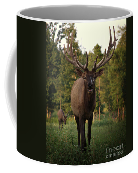 Elk Coffee Mug featuring the photograph Chester by Kim Henderson