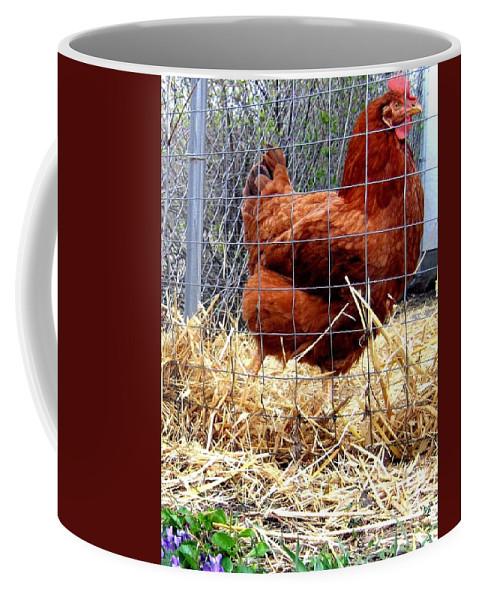 Chicken Coffee Mug featuring the photograph Chicken In The Straw by Will Borden