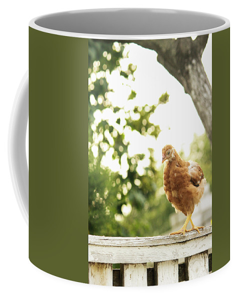 Chicken Coffee Mug featuring the photograph Chicken On Fence by Aliza Anderson