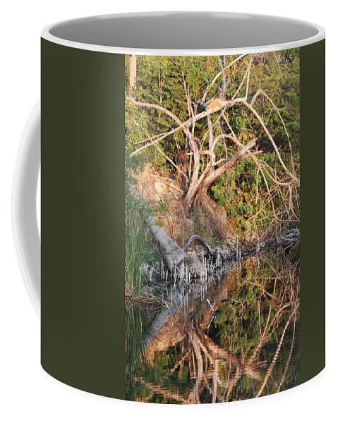 Iguana Coffee Mug featuring the photograph Chilling Iguana by Rob Hans