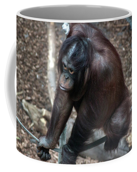 Monkeys Hanging Around Coffee Mug featuring the photograph Chimpanzee by Doc Braham