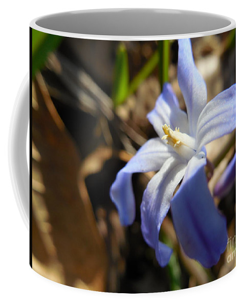 Glory Of The Snow Coffee Mug featuring the photograph Chionodoxa I I by Rowena Throckmorton
