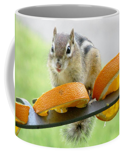 Lynne Miller Coffee Mug featuring the photograph Chipmunk And Oranges 2 by Lynne Miller