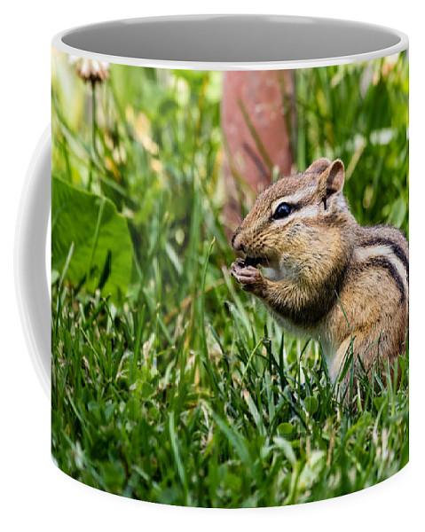 Chimpmunk Coffee Mug featuring the photograph Chipmunk Cutie by Dawna Moore Photography