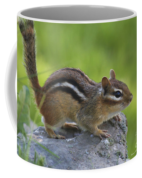Nature Coffee Mug featuring the photograph Chippy On The Move by Deborah Benoit