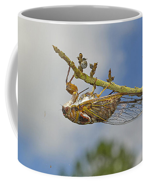Cicada Coffee Mug featuring the photograph Chirrup Chirrup by Kenneth Albin