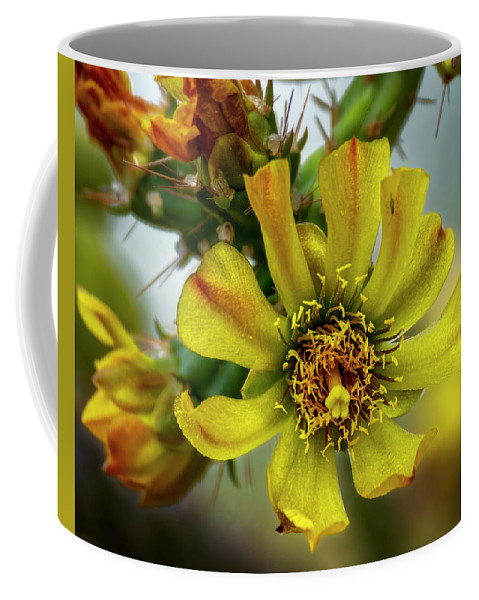 Cholla Coffee Mug featuring the photograph Cholla Flower H1848 by Mark Myhaver