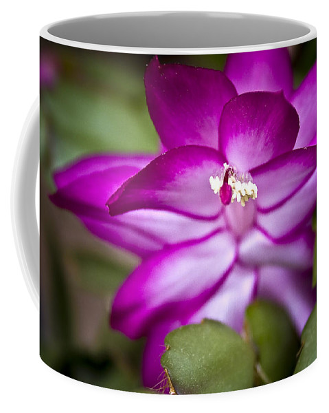 Cactus Coffee Mug featuring the photograph Christmas Cactus by Ches Black