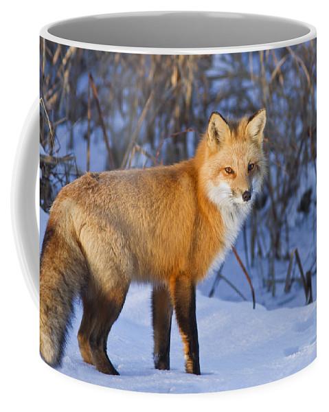 Animal Coffee Mug featuring the photograph Christmas Fox by Mircea Costina Photography
