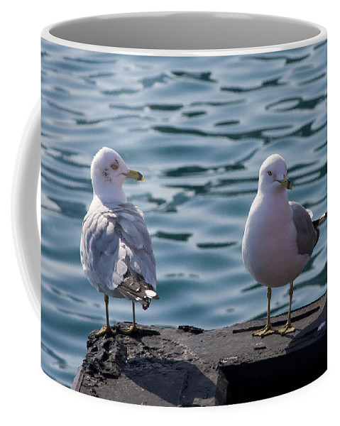 Gull Gulls Seagulls Lake Michigan Chicago Windy City Bird Couple Wave Water Pier Feather Coffee Mug featuring the photograph City Gulls by Andrei Shliakhau