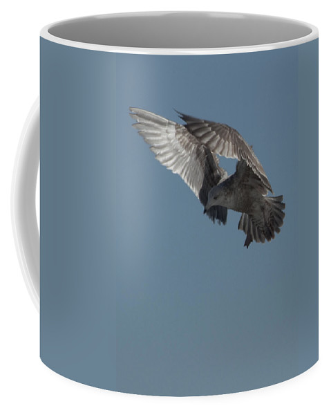 Seagull Coffee Mug featuring the photograph Clams For Dinner 3 by Steven Natanson