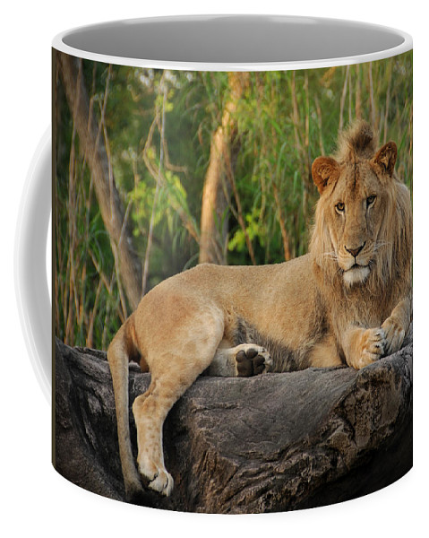 Lion Coffee Mug featuring the photograph Classic Young Male by Steven Sparks