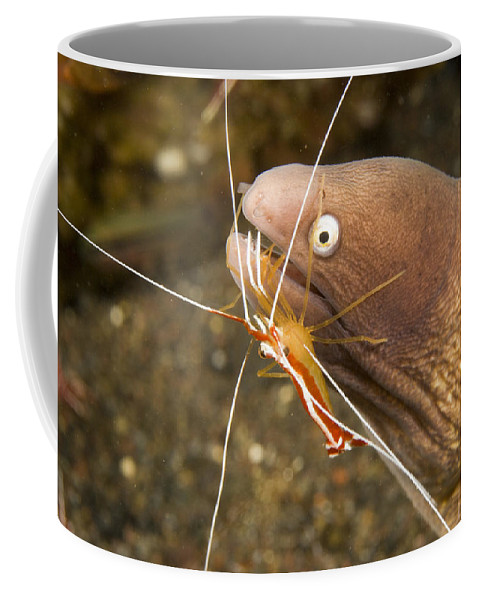 Cleaner Shrimp Coffee Mug featuring the photograph Cleaner Shirmp Cleans Parasites by Tim Laman