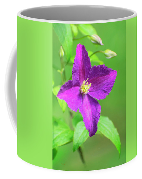 Clematis Coffee Mug featuring the photograph Clematis by Christina Rollo