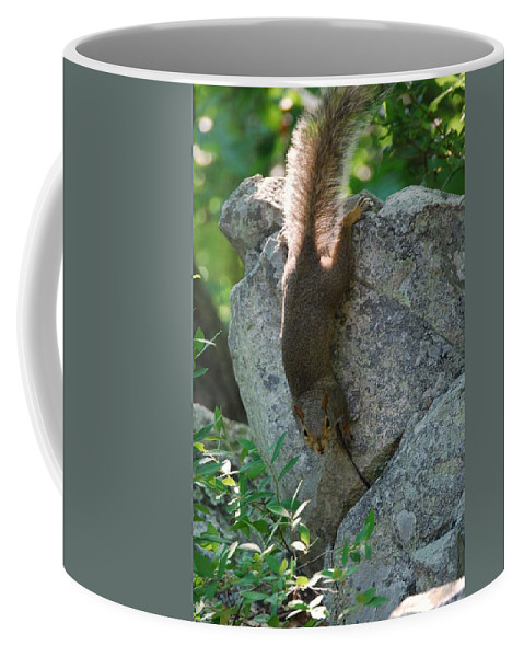 Squirrel Coffee Mug featuring the photograph Cliff Hanger by Eric Liller