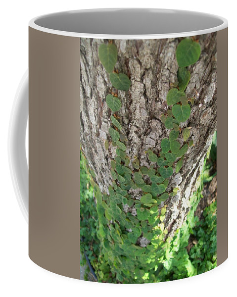 Ivy Coffee Mug featuring the photograph Climbers by Laurette Escobar