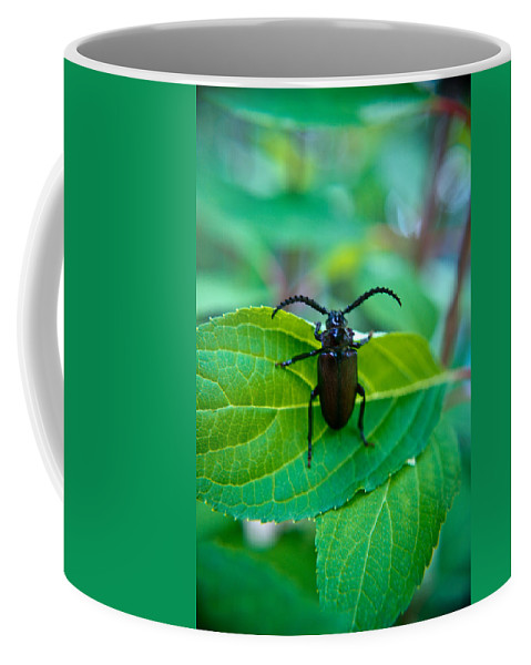 Coleoptera Coffee Mug featuring the photograph Climbing Beetle by Douglas Barnett