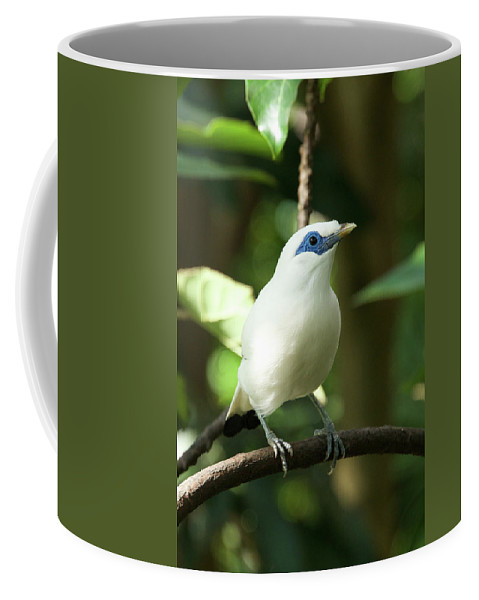 Bali Coffee Mug featuring the photograph Close-up Of Bali Myna Bird In Trees by Ndp