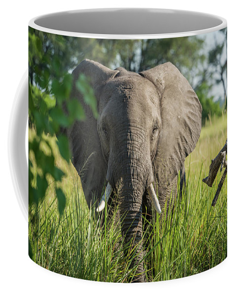 Africa Coffee Mug featuring the photograph Close-up Of Elephant Behind Bush Facing Camera by Ndp