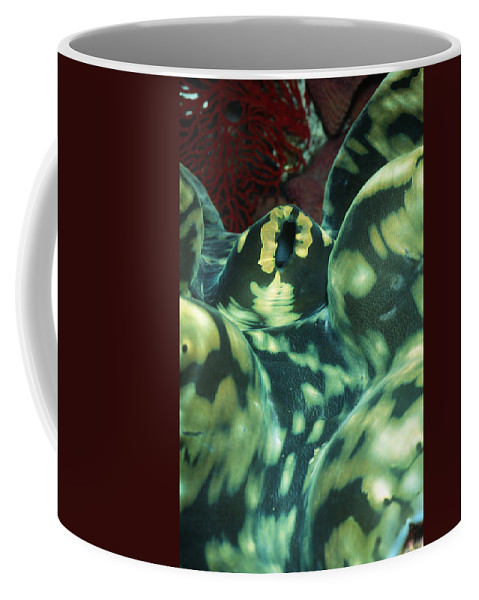 Solomon Islands Coffee Mug featuring the photograph Close-up Of Giant Clam, Tridacna Gigas by James Forte