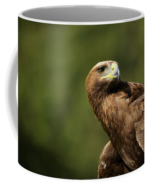Aquila Chrysaetos Coffee Mug featuring the photograph Close-up Of Golden Eagle With Head Turned by Ndp